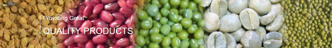 Ethiopian beans export company