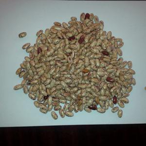 Ethiopian Light Speckled Kidney Beans
