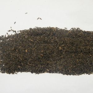Ethiopian Niger Seed